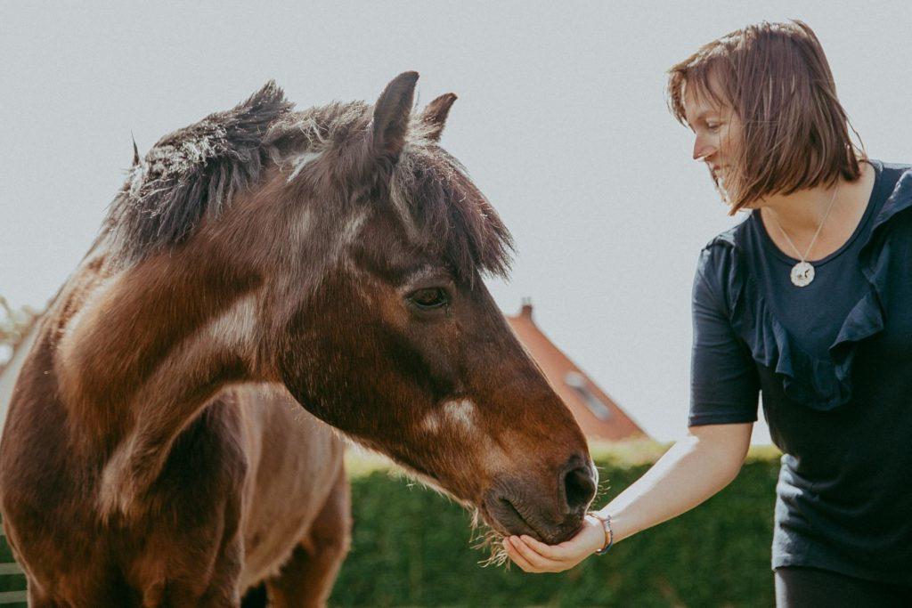seance photo cheval